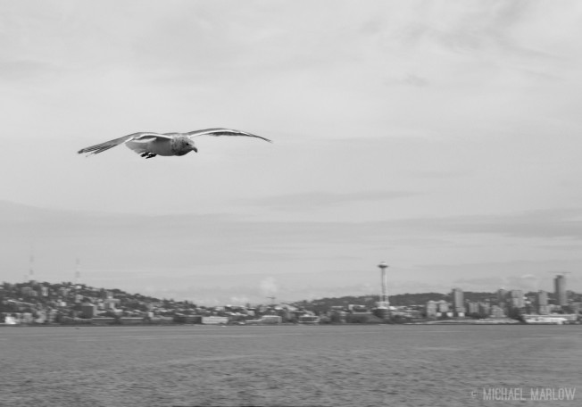 white and grey gull flies with wings held out horizontally with Seattle in background
