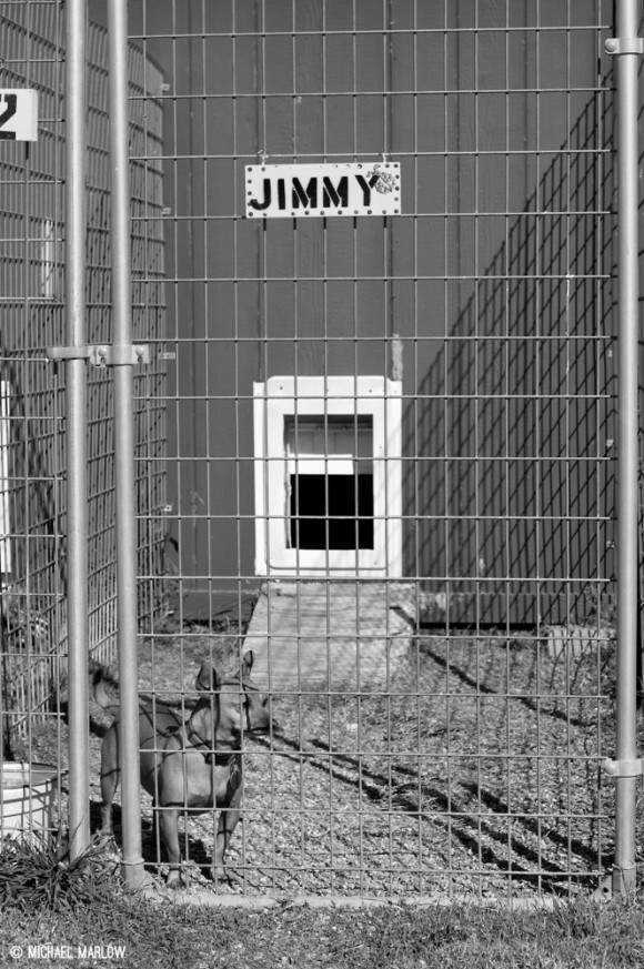 small dog behind chainlink fence with Jimmy sign above