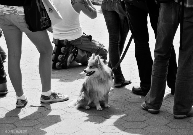 small fluffy dog sitting amidst legs of standing people and one roller blader kneeling